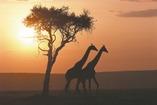 African_skies